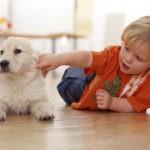 Собака и новорожденный ребенок…
