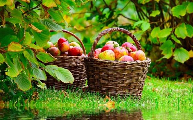 Хотите похудеть – ешьте яблоки!